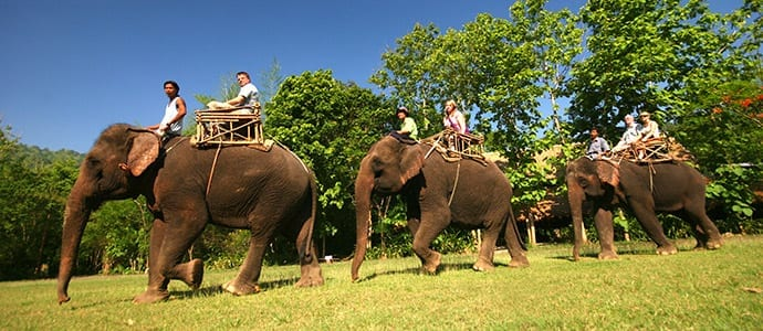 Elephant Riding and White Water Rafting in Phang Nga