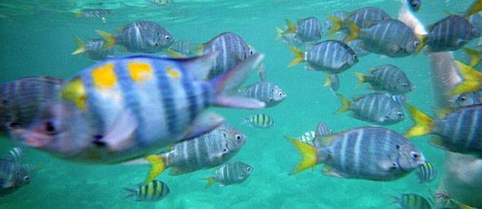 Fischen und Schnorcheln auf Koh Racha