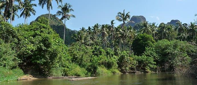 Khao Sok Jungle Explorations